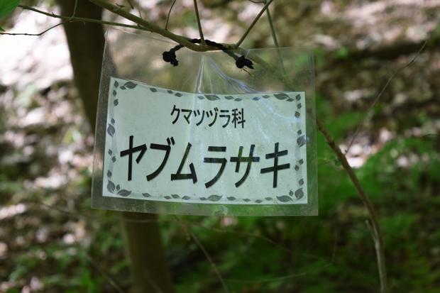 ヤブムラサキ