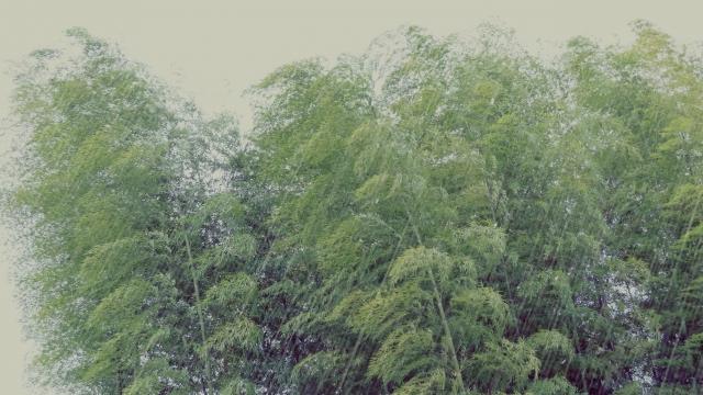 台風でも落葉しない